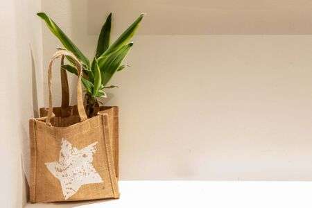 Interior green plant in a nature eco brown burlap sack against the grey and white walll on a desk or table. Modern minimalistic interior design. Copyspace.