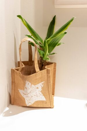 Interior green plant in a nature eco brown burlap sack against the grey and white walll on a desk or table. Modern minimalistic interior design. Vertical