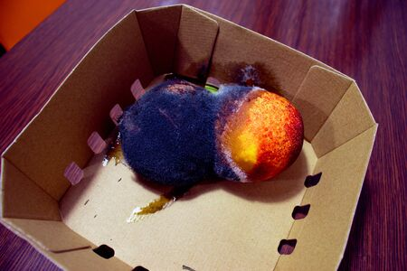Two spoilt nectarine fruits with black and white mold. Close-up. In a carton box. Stock Photo