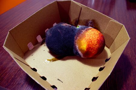 Two spoilt nectarine fruits with black and white mold. Close-up. In a catron box.