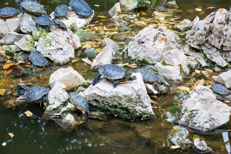 Turtle pond in the park in Athens Greece