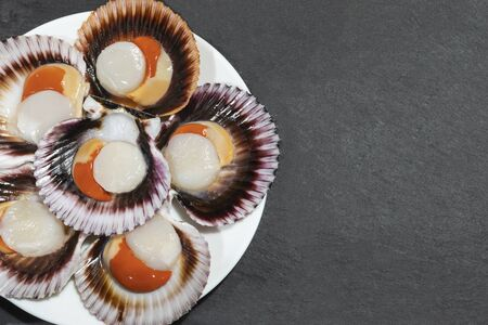 A white plate of big raw fresh scallops with orange caviar and shells on a dark background. Copy space.