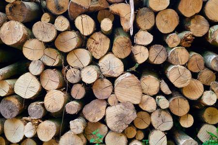 Circle patterns of cut tree trunks