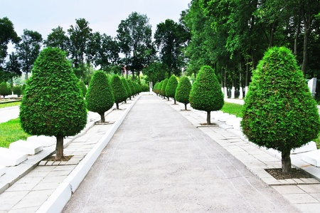 Path for walk in park with beautifully cut small trees along the edges photo