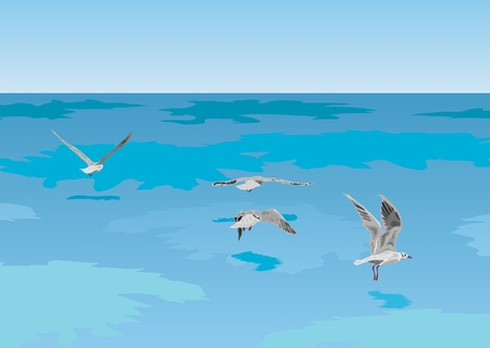 The vector image of seagulls flying over the sea Vector