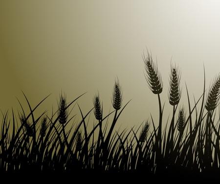 Grafika wektorowa polu pszenicy