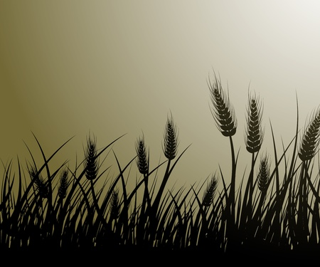 grain fields: Vector image of wheat field Illustration