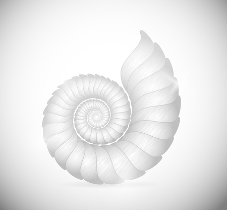 shell: Illustration of a sea shell clam  Eps 10