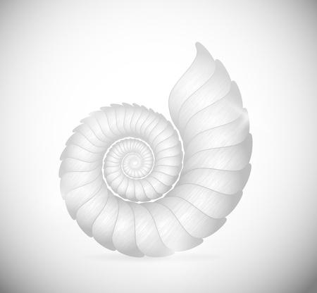 conchas: Ilustraci�n de un mar de concha de almeja Eps 10
