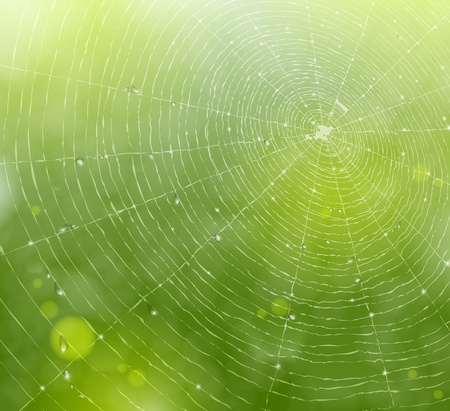 spider: Natural background with a spider web and drops  Illustration