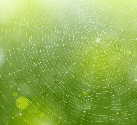 ochtend dauw: Natuurlijke achtergrond met een spinnenweb en druppels