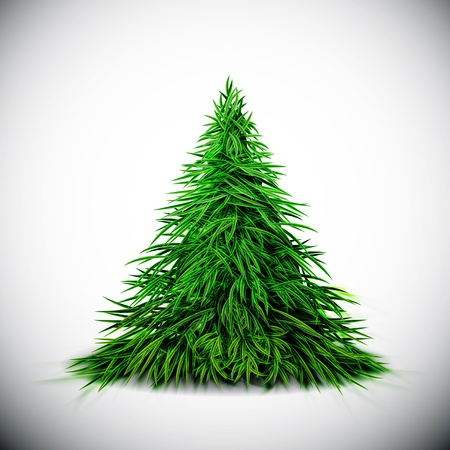 evergreen tree: Isolated Christmas tree   Illustration