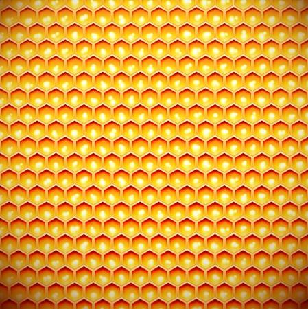 celula animal: Peine de la miel, de fondo