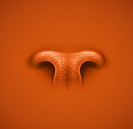 Isolated animals nose  Vector