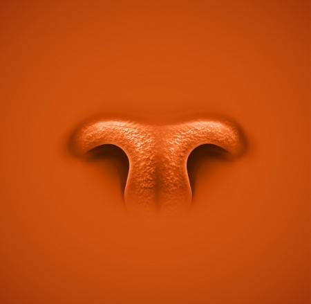 Isolierte Tier die Nase Illustration