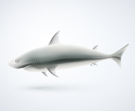 One isolated shark, eps 10 Vector