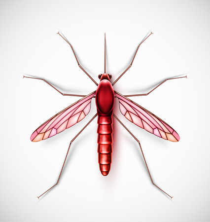 disease carrier: Isolated mosquito Illustration