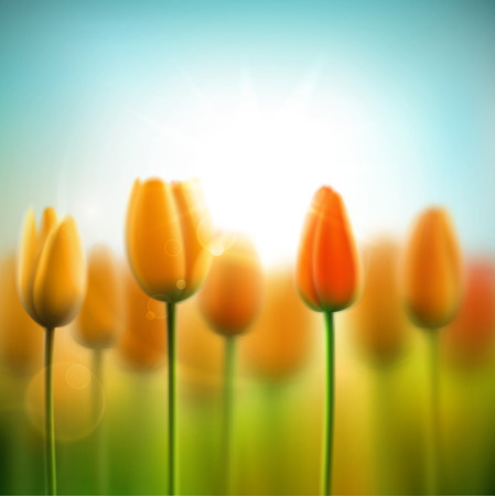 tulips in green grass: Spring background with tulips Illustration