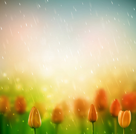 Summer rain, background with tulips  Vector