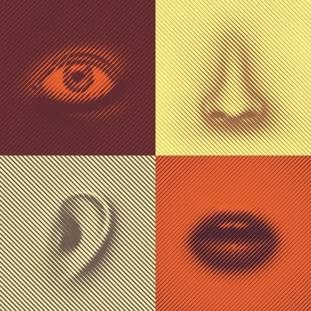 sensual: Part of face of lines (eye, nose, ear and mouth)