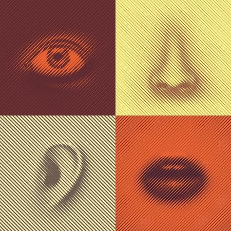 oreja: Parte de la cara de l�neas (ojos, nariz, o�dos y boca) Vectores