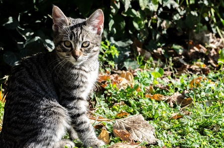 knack: Cat on green background with dry leaves