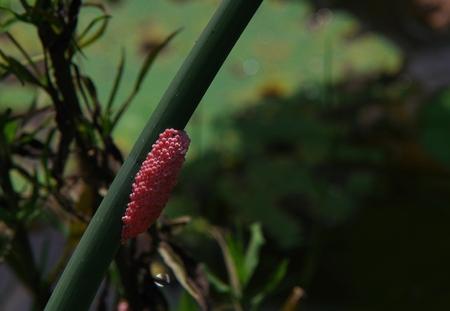 snail egg Stock Photo