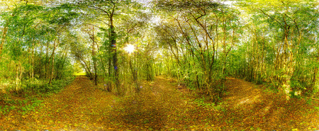 Panorama from a forest in Oughterard, Co. Galway. Ireland. photo