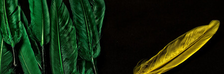 A group of feathers in green with separate feather in yellow set aside. Concept shot for separation or uniqueness.