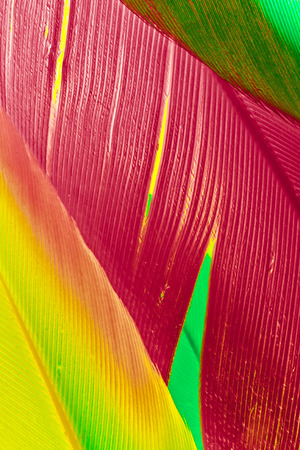 Macro shot for a set of random vibrant colorful feathers, useful as background or backdrop.