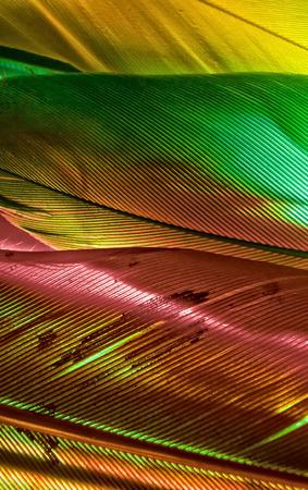 arbitrario: Tiro macro para un conjunto de plumas de colores vibrantes al azar, útil como fondo o telón de fondo.