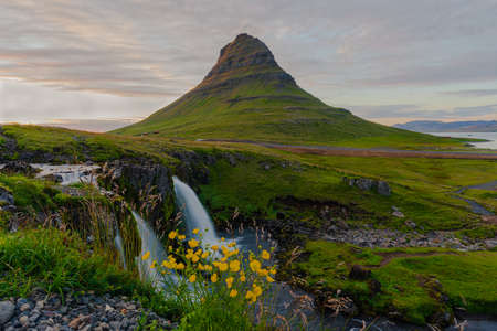 sunset at kirkjufell and kirkjufellsfoss with flower in the foreground in Iceland