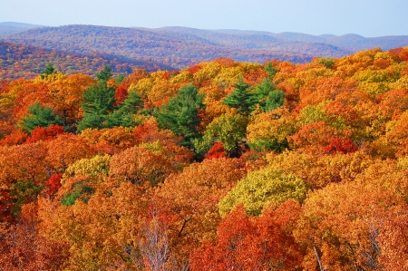 state park: panorama of autumn forest in bear mountain state park, new york Stock Photo