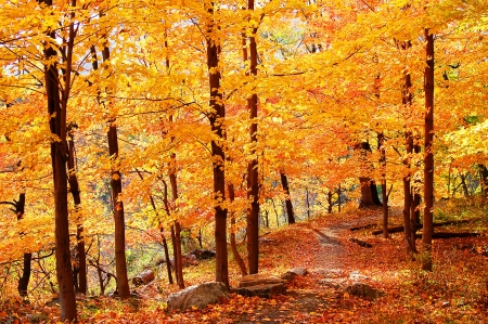 colorful forest photo