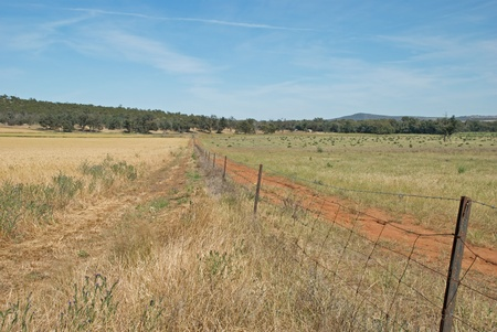 a fence line in between crop and pasture photo