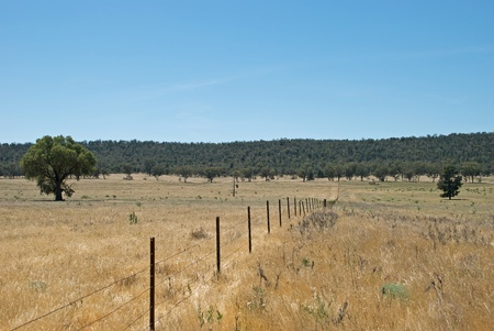 a fence line between two farm paddocks Stock Photo - 13135165