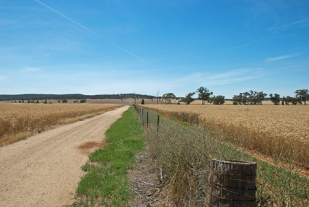 a fence line between 2 cereal crops Stock Photo - 13527042
