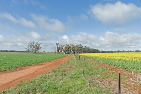 fence line between cereal and a flowering canola cropwith cloudy sky photo