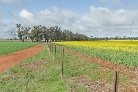 fence line between cereal and canola crops photo