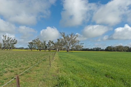 fence line between young crop and grass pasture with cloudy sky photo