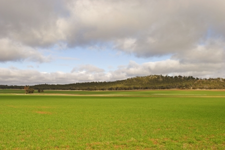 a young healthy crop with hill and cloudy sky Stock Photo
