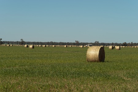 hay bales in a grass paddock with blue sky photo