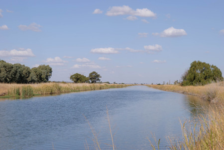 a straight stretch of water in an irrigation channel full of water with reeds and trees on the sides and clouds in the sky on a sunny day