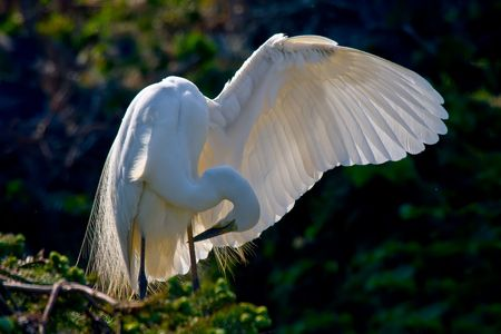 egret: Chinas Jiangxi Province to live in the wild egret feeding children Stock Photo