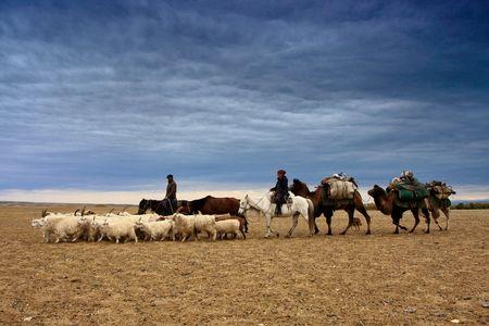 xinjiang: Chinas Xinjiang herdsmen autumn migration (transition)