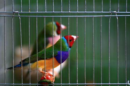 Were caged bird