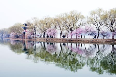 Peach blossoms in full bloom in the Summer Palace park in Beijing Stock Photo