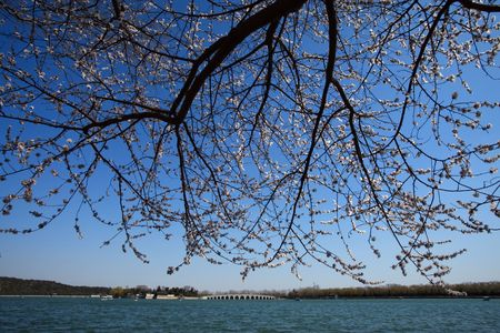 Peach Blossom Spring in the Summer Palace Park photo