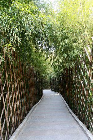 culdesac: Bamboo at the cul-de-sac Stock Photo