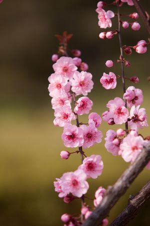 Spring flowers in full bloom photo